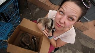 Anna Nekaris and a slow loris in a market in