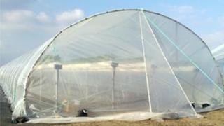 An EU Plants Ltd polytunnel on their Abingdon site