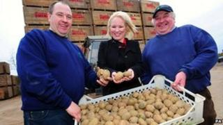 Comber potatoes