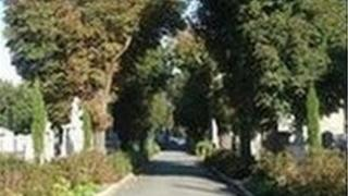 Graveyard avenue and yew trees