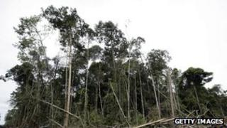 File photo: Trees in Indonesia