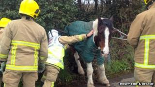 Jersey firefighters free trapped horse