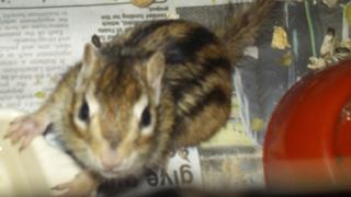 Alvin the chipmunk