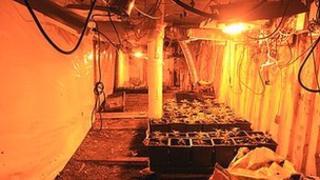 Underground cannabis factory on farmland in Somerset