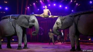 Elephants performing at a circus in Monaco