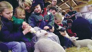 Children feeding lambs at Wroxham Barns, Norfolk