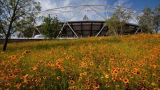 Olympic Stadium wildflower meadow