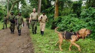 Dogs training at Virunga, September 2011