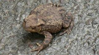 A toad on a road