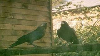Tilly and Tarquin at the Raven Haven