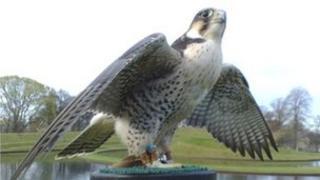 Naph the falcon