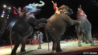 Elephants performing in Munich, Germany in 2007. Photo: Getty Images