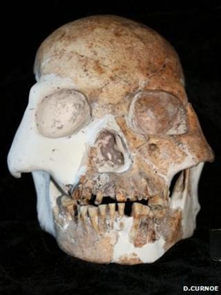Longlin skull (Darren Curnoe)