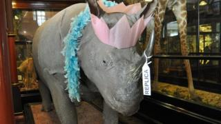 Rosie the rhino wearing a party hat at Ipswich Museum