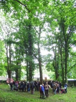 Grove Wood in Stapleton, Bristol
