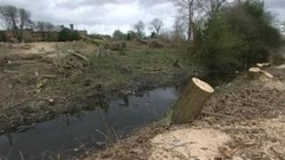 Felled trees in Stafford