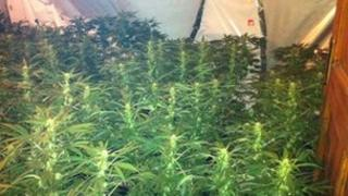 Cannabis factory, County Fermanagh