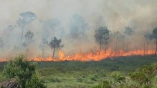 The fire in Upton Heath last year