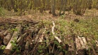 Managed woodland