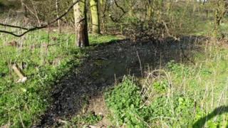 Dumped waste oil