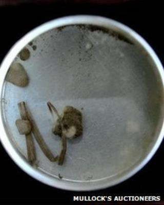 Blades of grass and soil with Gandhi's blood in the glass topped case