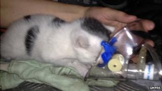 Kitten receiving oxygen