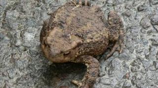 Generic toad