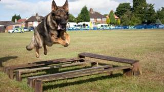 Merseyside Police dog