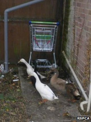 Ducks left outside supermarket