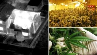 Montage of three pictures (clockwise), a photograph of a house taken with thermal imaging equipment (from Press Association), a cannabis farm and a gloved hand holding a cannabis leaf (from Getty)
