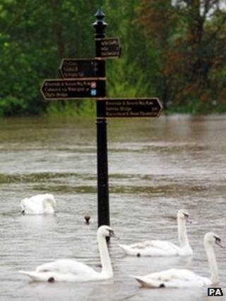 Swans swim past signs for riverside walks along the River Severn in Worcester