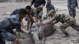 Livestock affected by flash flooding in Nepal
