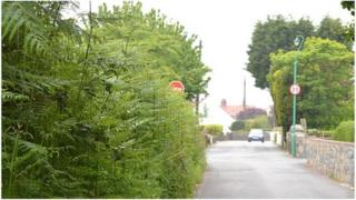 Overgrown hedge (States of Guernsey)
