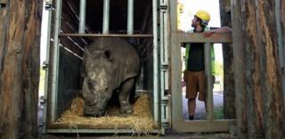 Lucy the Rhino
