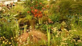 Cath's Garden Plants exhibit at Chelsea Flower Show