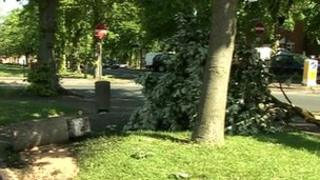 Tree crash on Coleman Road in Leicester