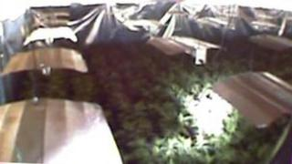 Cannabis farm inside Leicestershire factory