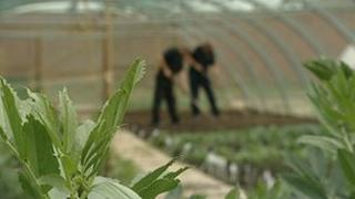 Inmates work at Spring Hill Farms and Gardens