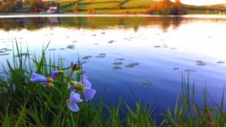 Loughbrickland Lake and toxic algae