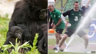 'Shay Gibbon' and Shay Given