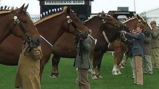 Suffolk Punch horses at the Suffolk Show