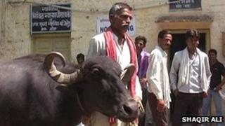 Heeralal Gurjar with his buffalo outside the court in Rajasthan