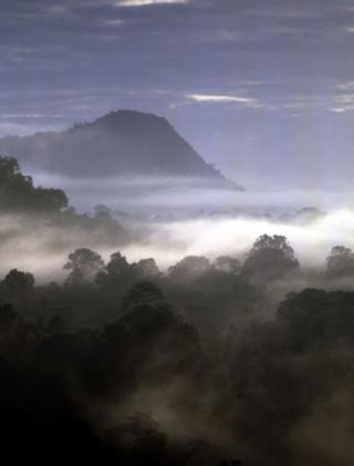 Mist covers a tropical forest (Image: BBC)