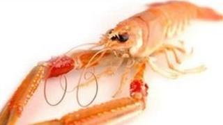 Scottish langoustine. Pic: Supplied by Mallaig and Northwest Fishermen's Association