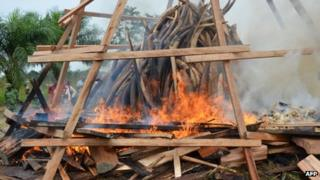 Seized ivory goes up in smoke in Libreville, Gabon, on Wednesday, 27 June 2012, in a ceremony to symbolise Gabon's commitment to ending poaching and other wildlife crimes