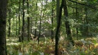 Woodland in the Forest of Dean
