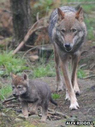 Pup and mother Elara