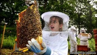 A child holds a honeycomb plate with bees on it