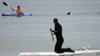 Walter Szulc in kayak looks back at the dorsal fin of an approaching shark at Cape Cod on Saturday 7 July 2012