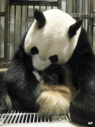 Panda Shin Shin with her baby